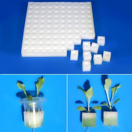 100pcs Seedlings Planted Sponge Net Pot Inserts Clone Collar Foam Insert (HHI-541907)