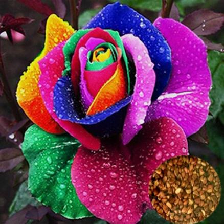 10pcs Colorful Rose Flower Plant Seeds (TDS-378192)